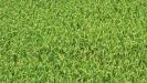 Biodynamic Soils